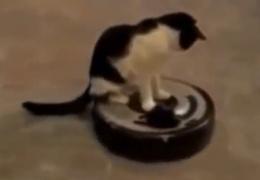 Большая подборка кошачьих шалостей