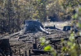 В Латвии возле границы с Эстонии остановили распространение лесного пожара