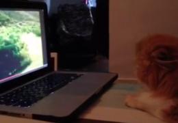 Реакция кота на видео-пугалку