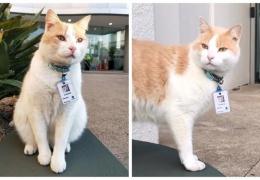 Кот целый год слонялся вокруг больницы, а потом его взяли туда охранником