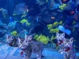 Мимимиметр взорвался! Котята и щенки гуляют по гигантскому аквариуму!