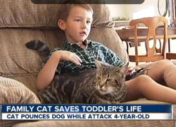Кот спас ребенка от собаки
