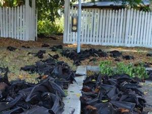 Экологическая катастрофа в Австралии!