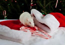 Астрологи объяснили правила, которые помогут привлечь удачу в год Крысы