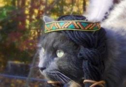 Кошки в шляпах (7 фотографий)