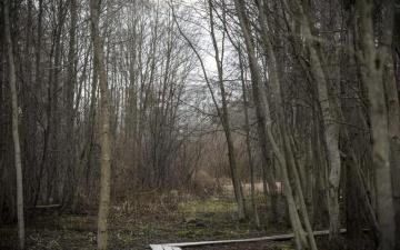 Судебный процесс по делу об убийстве нарвитянки Дарьи будет закрытым