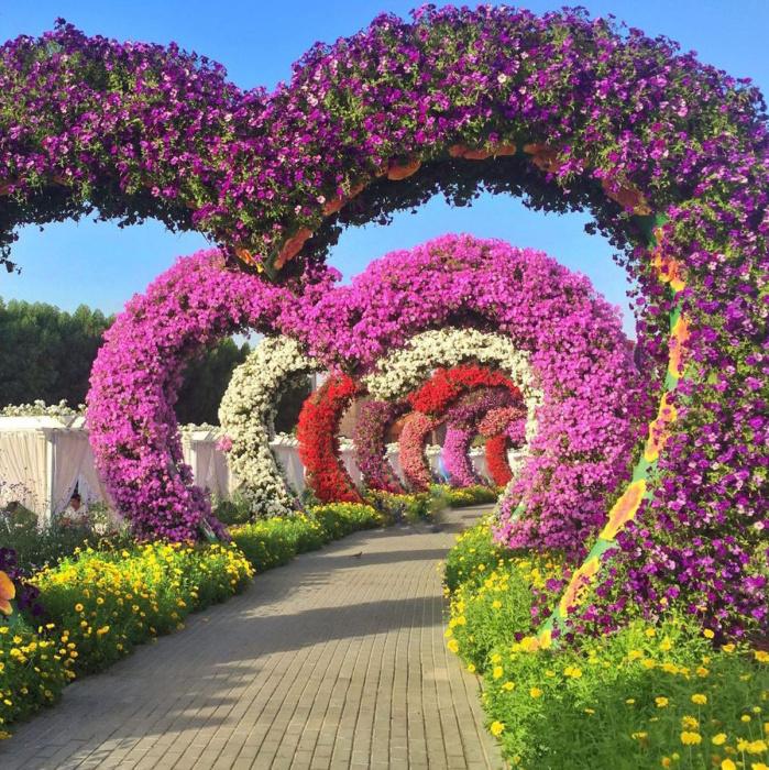 Парк Dubai Miracle Garden – цветущий оазис в пустыне