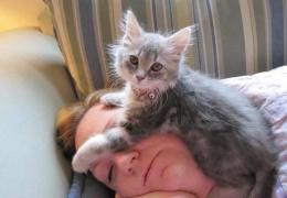 Зачем кошки спят на человеке? 5 причин