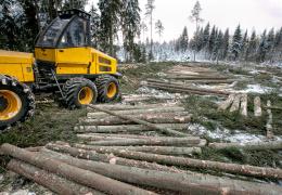 Жители Нарва-Йыэсуу хотят защитить от вырубки лес в округе