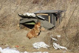 В Приморье собака третий год ждет своего хозяина на трассе