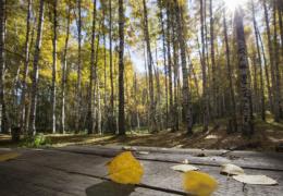 Метеоролог: бабье лето ожидается в Эстонии в октябре