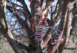 У Шишкинской сосны в Нарва-Йыэсуу едва не произошла трагедия