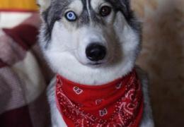 Собака-Терминатор