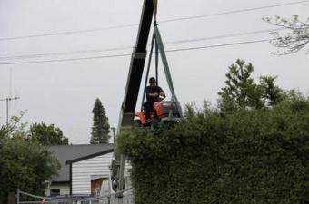Стрижем верхушки деревьев