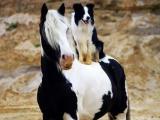 Вот и свела судьба: двойники в мире животных