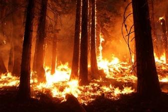 Дым от неконтролируемых лесных пожаров в Сибири дошел до Монголии. Вскоре он может накрыть и Москву. Масштаб пожаров виден из космоса
