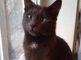 Милейшие коты с глазками вразбег, чей изъян делает их уникальными