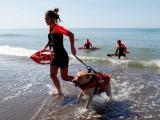 Школа собак-спасателей в Италии