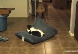 Наглые кошки