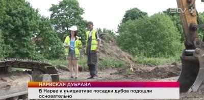 """В Нарве в рамках акции """"Сто дубов для Эстонии"""" появятся три парковые зоны"""