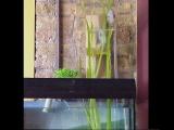 Очень необычные аквариумы