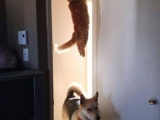 Где же кот?