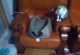 Игры кошачьего разума