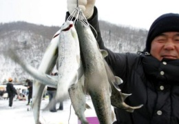 Суровая рыбалка в Южной Корее