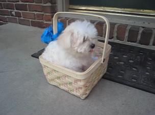 Отец подарил дочери долгожданного щенка