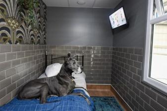 Пятизвездочный отель для собак открылся в Великобритании