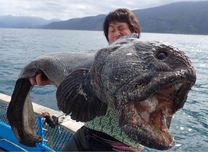 Страшная рыба, пойманная у Фукусимы
