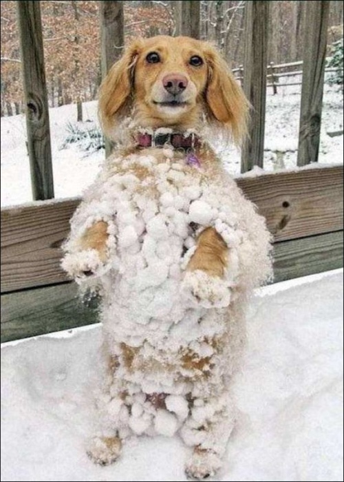 Животные в снегу