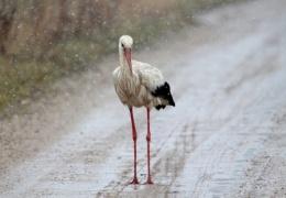 Синоптики: в четверг в Эстонии возможен мокрый снег