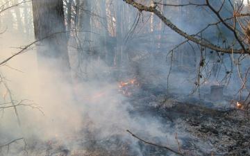 За выходные спасатели Ида-Вирумаа 37 раз выезжали тушить горящую траву