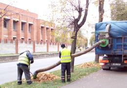 Жители жалуются на шум машины, которая собирает опавшие листья