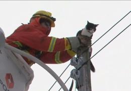 Высоко сижу - далеко гляжу: кот сидящий на вершине электрического столба