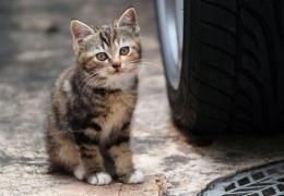 Нарвскому приюту для кошек Kassituba не хватает денег, помощь от города под вопросом