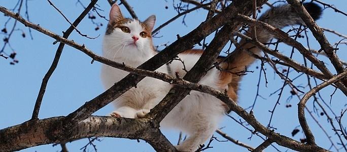 Кошка застряла на дереве: что делать?
