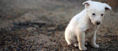 Защитники животных призывают не забывать домашних любимцев на даче