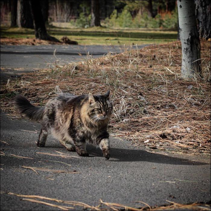 Самый старый кот в мире