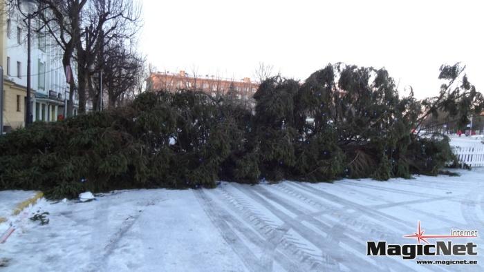 Штормовой ветер свалил в Нарве новогоднюю елку