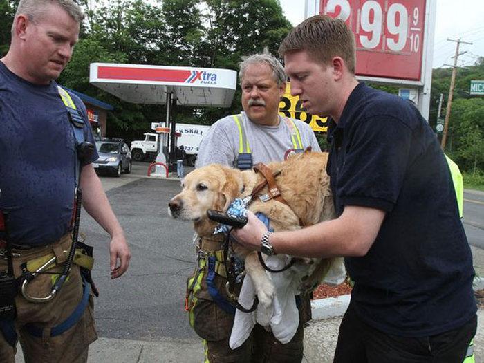 Собака-поводырь совершила героический поступок