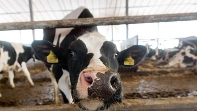 В январе закупочные цены на молоко снизились в Эстонии на 2,5%