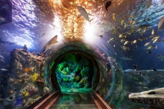 S.E.A Aquarium крупнейший океанариум на планете