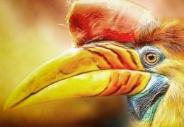 Животные и птицы на снимках Мануэлы Кульпа