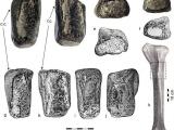 В Ирландии впервые обнаружили кости динозавра
