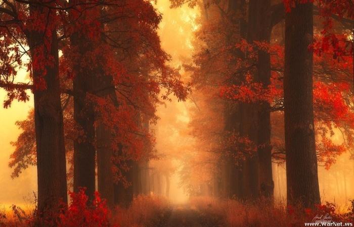 Оторвитесь на пять минут от всех дел и прогуляйтесь по сказочному лесу