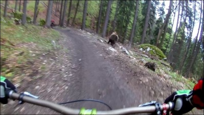 Медведь добавил экстрима велогонщикам