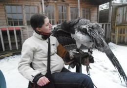 Девушка заботится о хищных птицах