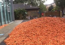 В Лондоне неизвестный человек вывалил 32 тонны моркови перед кампусом Голдсмитского университета